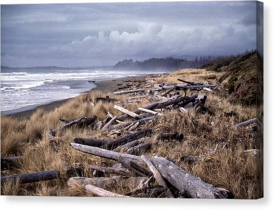 Beached Driftlogs Canvas Print