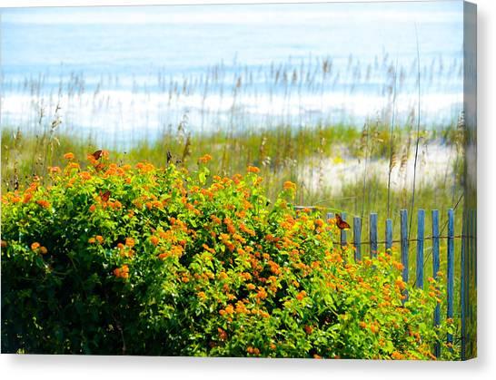 Beachy Butterflies  Canvas Print