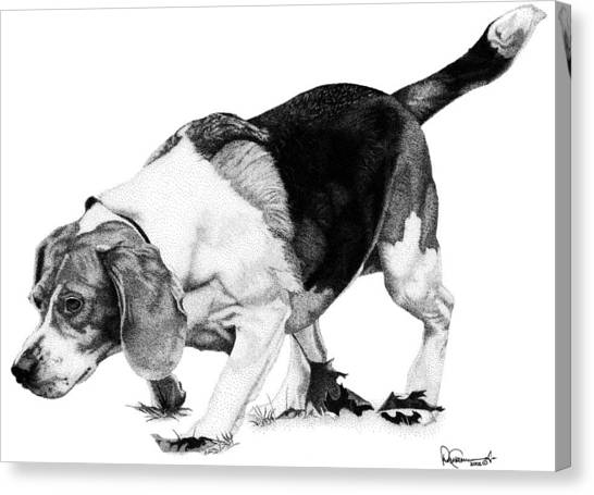 Beagle On The Hunt Canvas Print by Rob Christensen