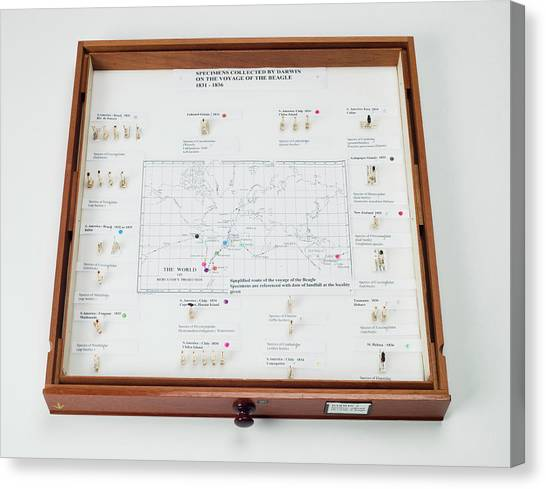 Beagles Canvas Print - Beagle Voyage Map And Display by Natural History Museum, London/science Photo Library