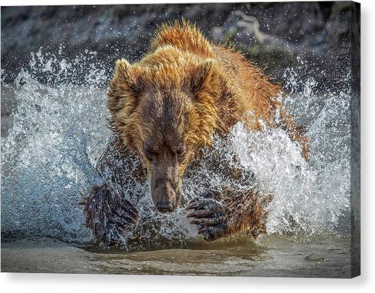 Russia Canvas Print - Bear Action by Roshkumar