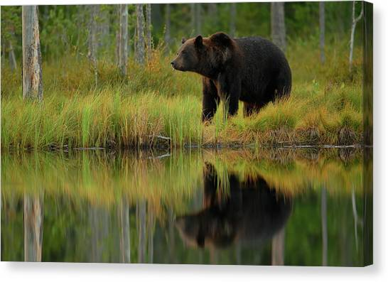 Bear And Fish *** Canvas Print by Assaf Gavra
