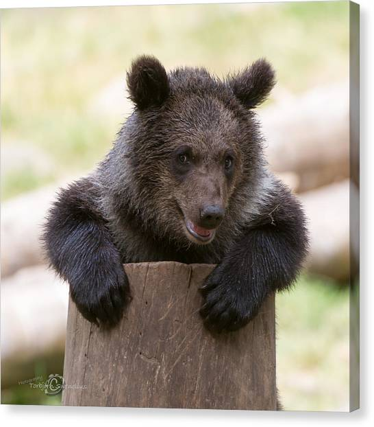 Bear Cub Canvas Print