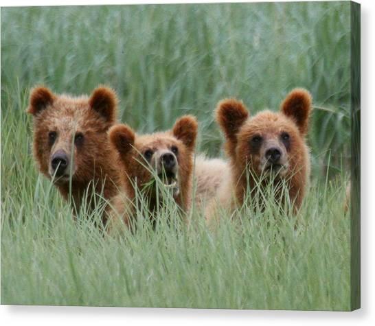 Bear Cubs Peeking Out Canvas Print