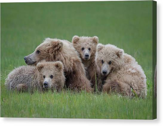 Wrestling Canvas Print - Bear Huddle by Renee Doyle