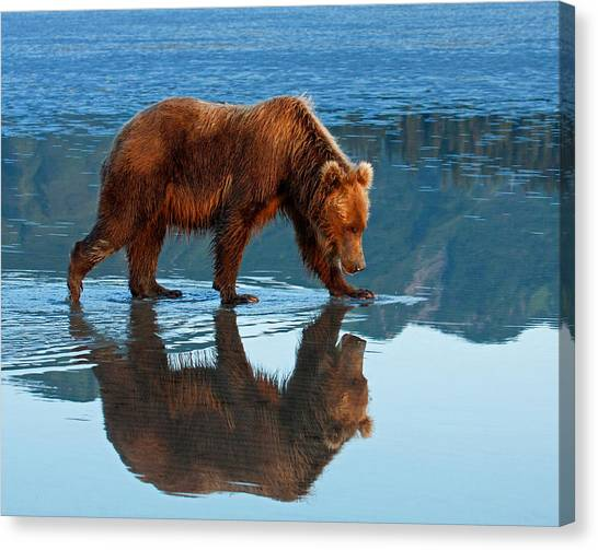 Bear Of A Reflection 8x10 Canvas Print