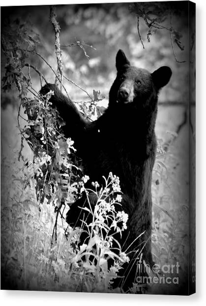 Bear Pose Canvas Print