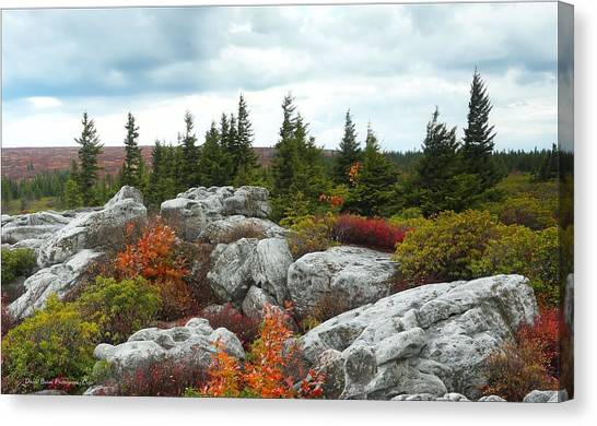 Bear Rocks Canvas Print