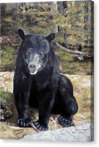 Bear - Wildlife Art - Ursus Americanus Canvas Print
