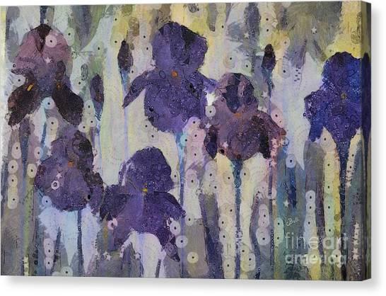 Bearded Irises Canvas Print