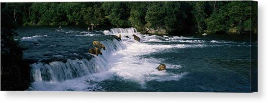 Brown Bears Canvas Print - Bears Fish Brooks Fall Katmai Ak by Panoramic Images