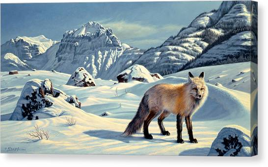 Yellowstone Canvas Print - Beartooth Fox by Paul Krapf