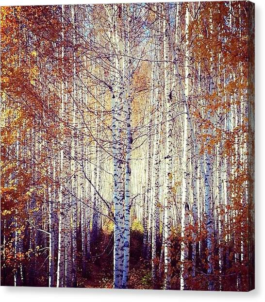 Grove Canvas Print - Beauties by Anastasia  Goryacheva