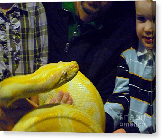 Burmese Pythons Canvas Print - Beautiful Albino Burmese Python by Renee Trenholm