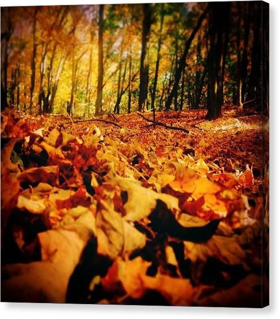 Harley Davidson Canvas Print - Beautiful Autumn 🍁 by Harley Altaville