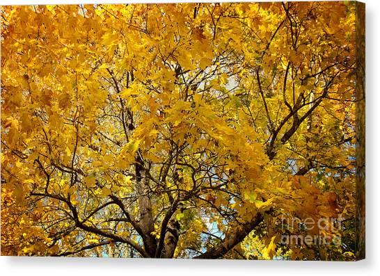Beautiful Autumn Tree Canvas Print by Jolanta Meskauskiene