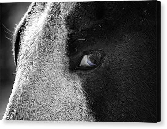 Beautiful Blind Soul Horse Canvas Print