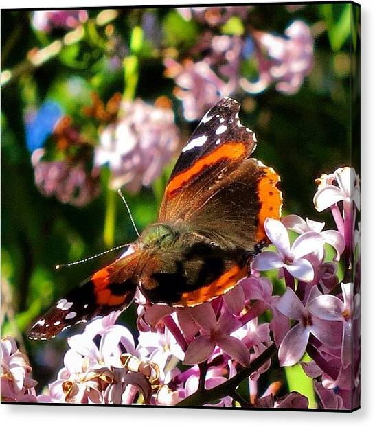 Wisconsin Canvas Print - Beautiful Butterfly In A Tree by Aran Ackley