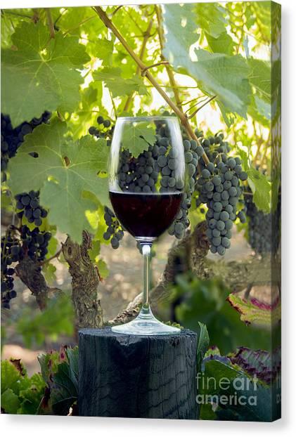 Wine Barrels Canvas Print - Beautiful Cabernet by Jon Neidert