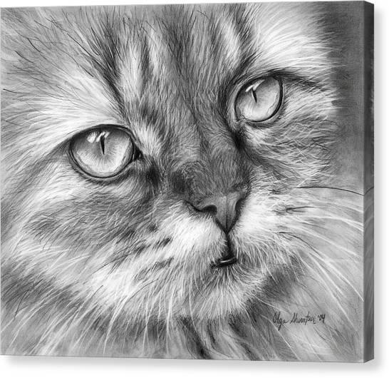 Pencil Art Canvas Print - Beautiful Cat by Olga Shvartsur