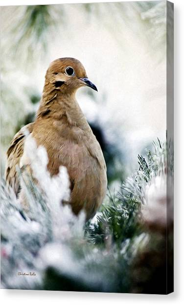 Mourning Dove Canvas Print - Beautiful Dove by Christina Rollo
