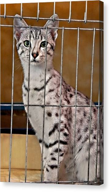 Egyptian Maus Canvas Print - Beautiful Egyptian Maus Cat In Cage by Valerie Garner