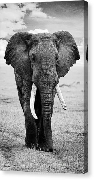 Beautiful Elephant Black And White 17 Canvas Print