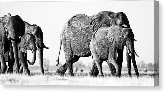 Beautiful Elephant Black And White 55 Canvas Print