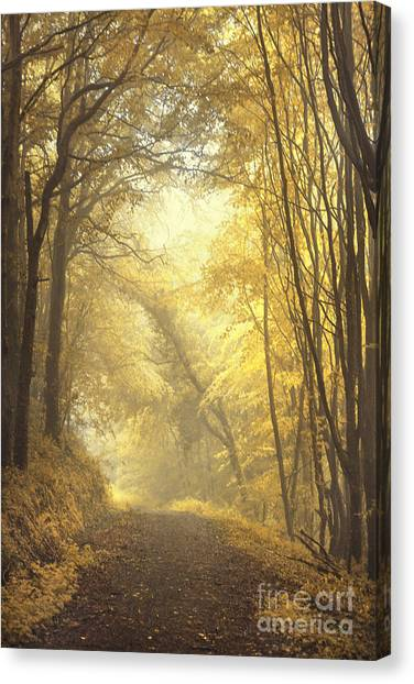 Foggy Forests Canvas Print - Beautiful Fall by Evelina Kremsdorf