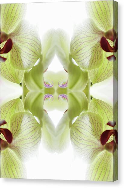 Beautiful, Finely Textured Orchid Canvas Print