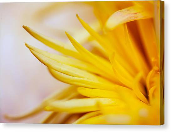 Spring Flower - Nature Photography Canvas Print