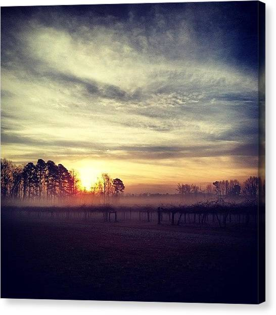 Vineyard Canvas Print - Beautiful Foggy Morning! #fog by Chris Morgan