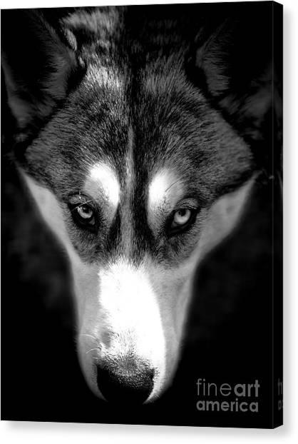 Beautiful Husky Canvas Print