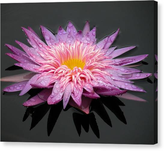 Beautiful Lily Canvas Print