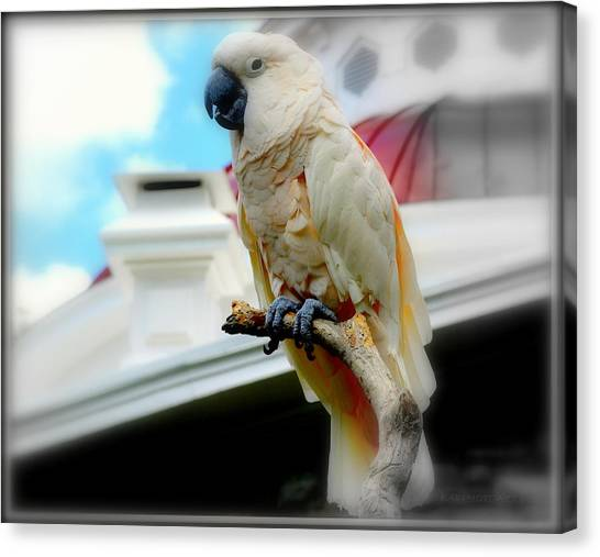 Beautiful Salmon-crested Cockatoo Canvas Print