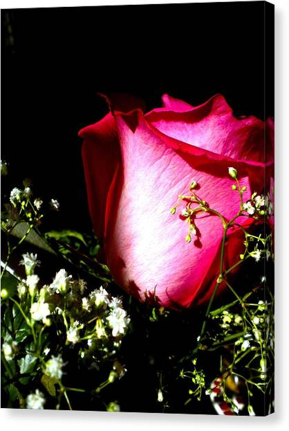 Beautiful Rose Canvas Print by Elizabeth Fredette