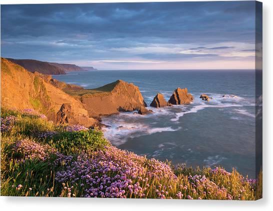 Cliff Burton Canvas Print - Beautiful Sea Pink Wildflowers In by Adam Burton / Robertharding