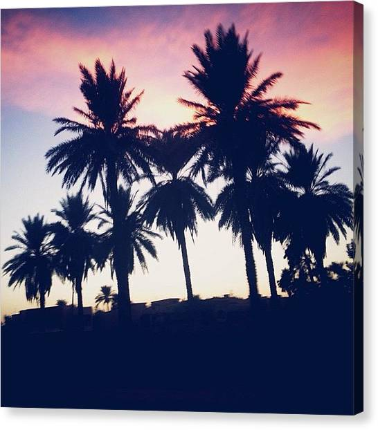 Palm Trees Sunsets Canvas Print - Beautiful Sky, Taken While Driving by Nawar Al-ani