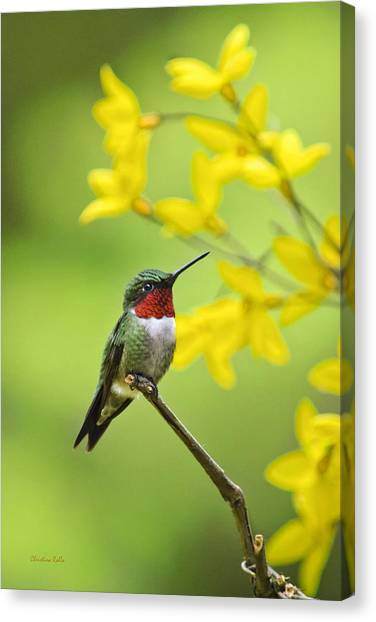 Beautiful Summer Hummer Canvas Print