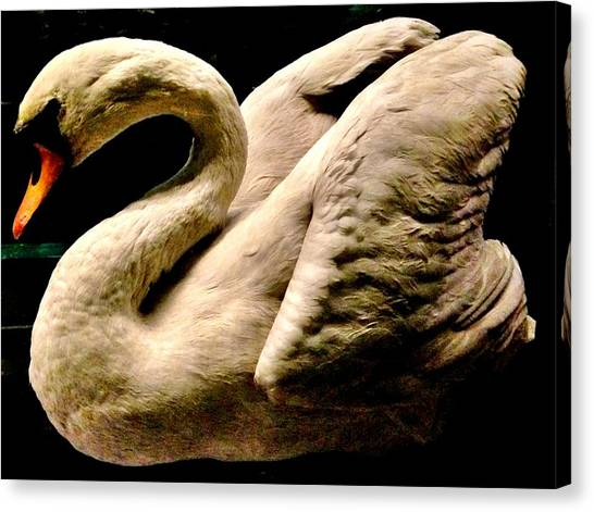 Still Life Canvas Print - Beautiful Swan 331 by Angela Seager
