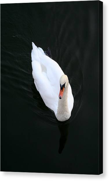 Beautiful Swan Canvas Print by Allan Millora