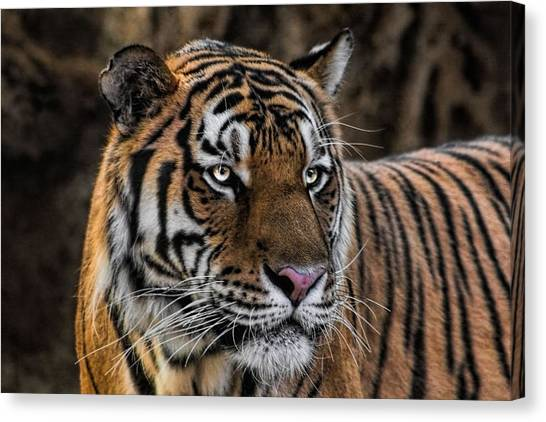 Beautiful Tiger Photograph Canvas Print