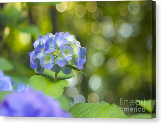 Beautiful Violet Hydrangea With Green Leaves And Bokeh Lights Canvas Print
