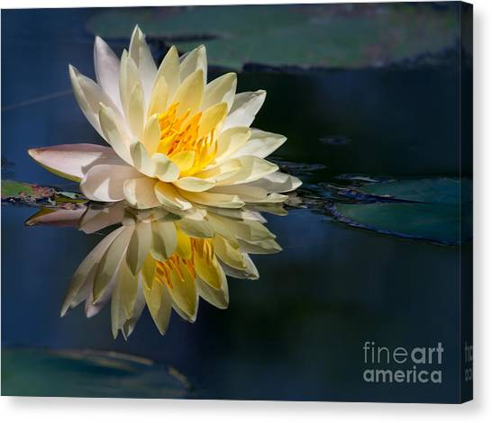 Beautiful Water Lily Reflection Canvas Print