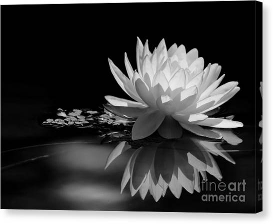 Beautiful Water Lily Reflections Canvas Print