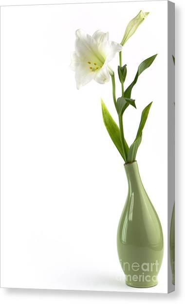 Beautiful White Flower Art Canvas Print / Canvas Art by Boon Mee