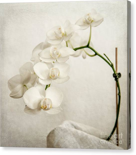 Beautiful White Orchid II Canvas Print