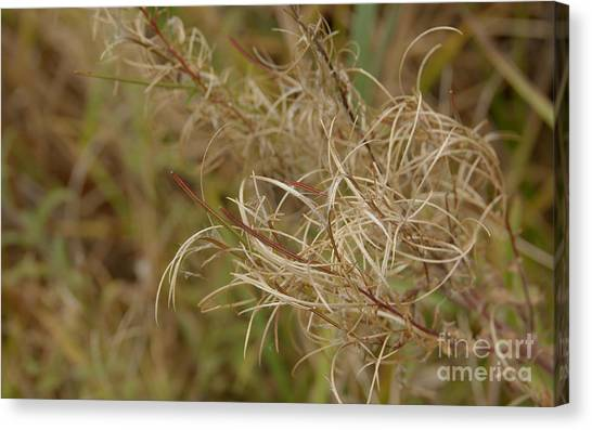 Beautiful Wild Plant Canvas Print by Jolanta Meskauskiene