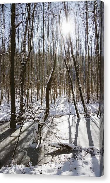 Baden Wuerttemberg Canvas Print - Beautiful Winter Day In The Forest The Sun Is Shining by Matthias Hauser