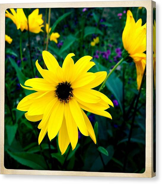 Yellow Canvas Print - Beautiful Yellow Flower by Matthias Hauser